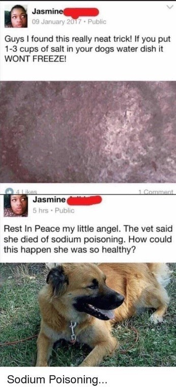 Dog - Jasmine 09 January 2017. Public Guys I found this really neat trick! If you put 1-3 cups of salt in your dogs water dish it WONT FREEZE! 1 Comment 4Likes Jasmine 5 hrs Public Rest In Peace my little angel. The vet said she died of sodium poisoning. How could this happen she was so healthy? Sodium Poisoning...