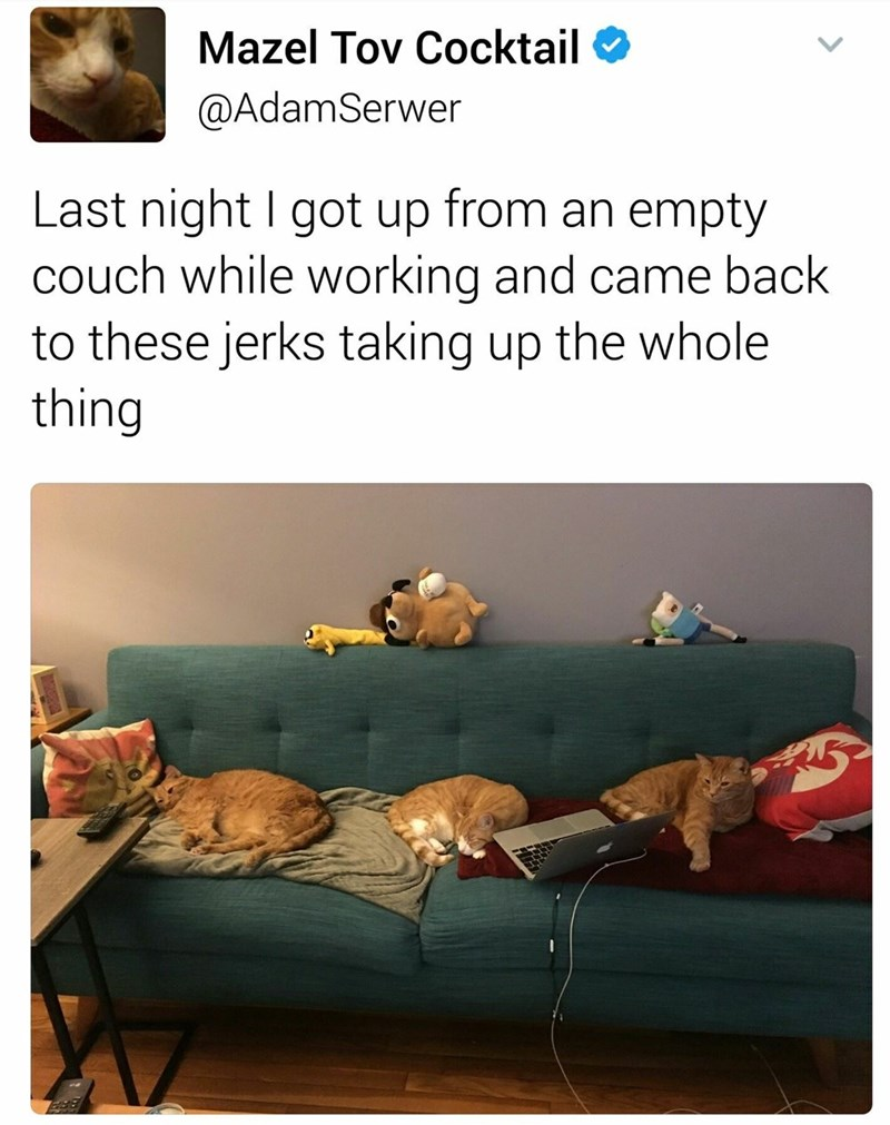caturday meme about cats taking over a sofa