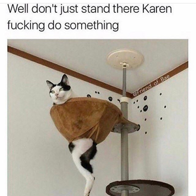 caturday meme of a cat stuck in a cat tree