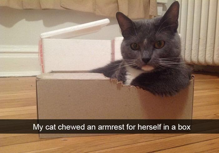 caturday meme of a cat re purposing a box