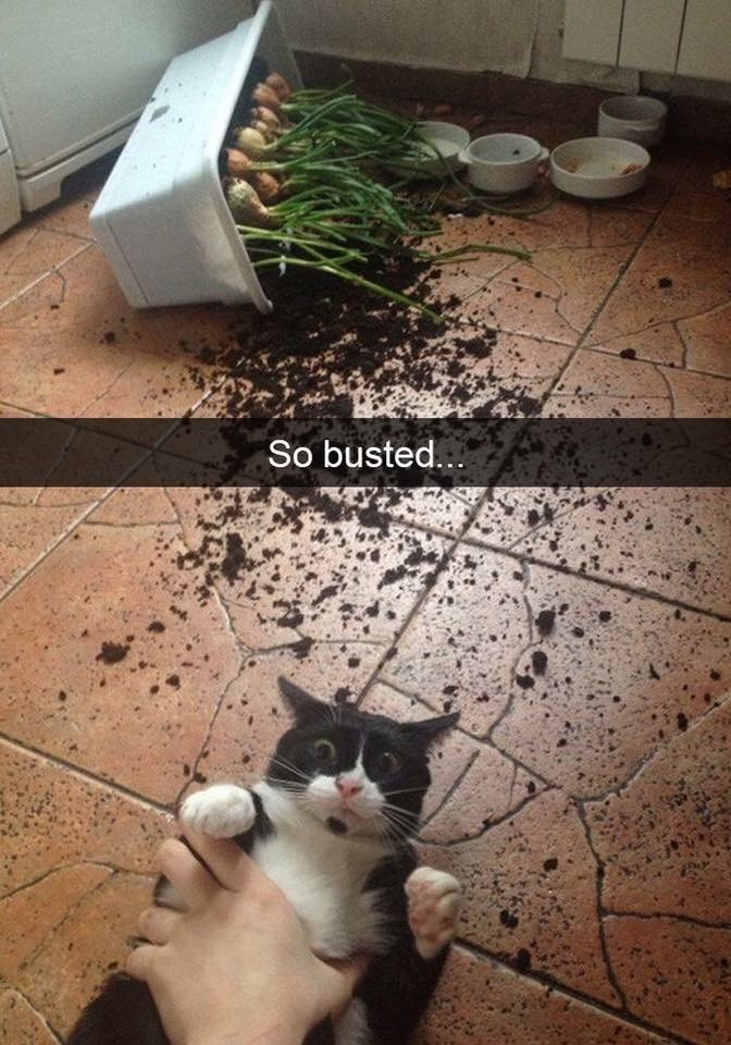 caturday meme of a cat caught destroying a plant