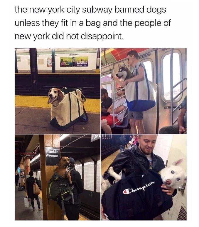 Product - the new york city subway banned dogs unless they fit ina bag and the people of new york did not disappoint. LVILEY AV Franklin Avenue Chumypion