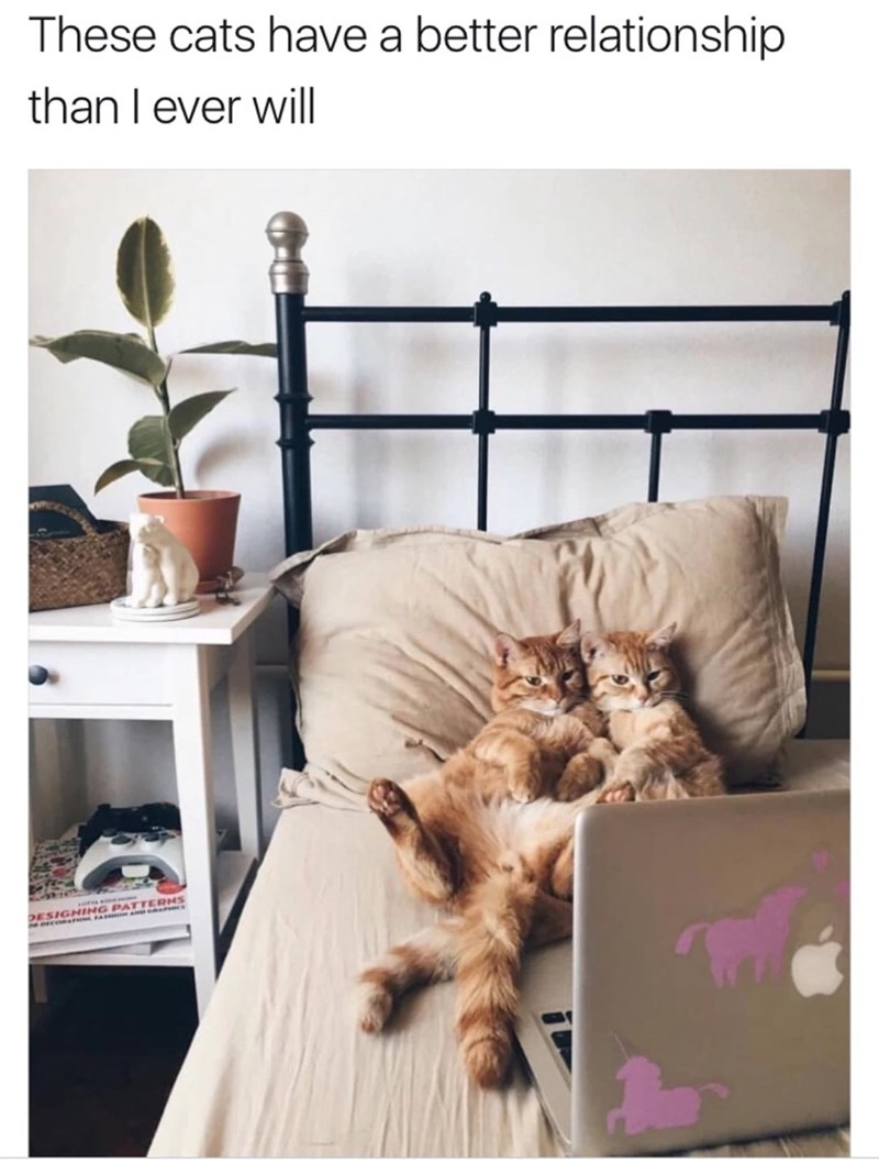 Cat - These cats have a better relationship than I ever will