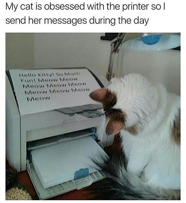 cat meme staring at the printer as it gets personal messages from its owner