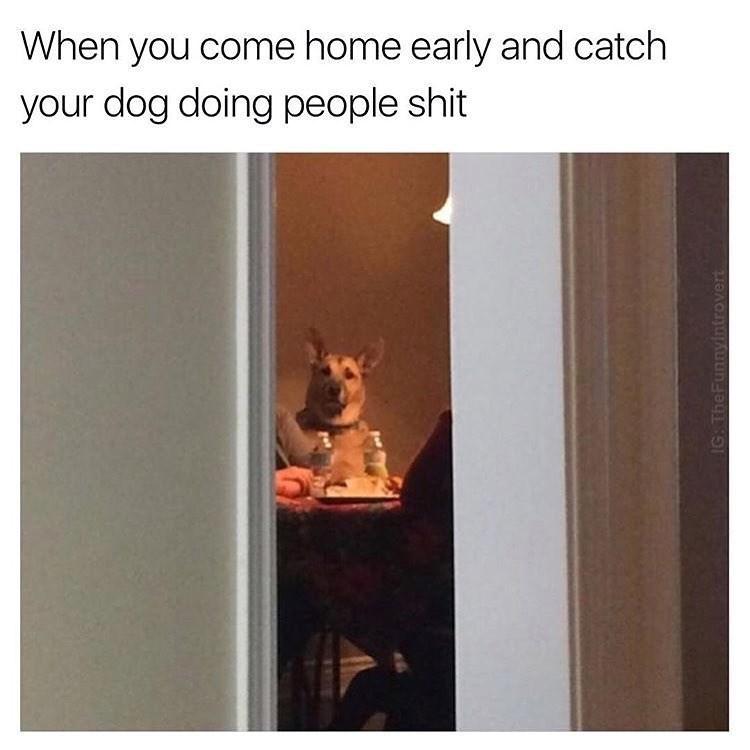 dog meme sitting at a dinner table