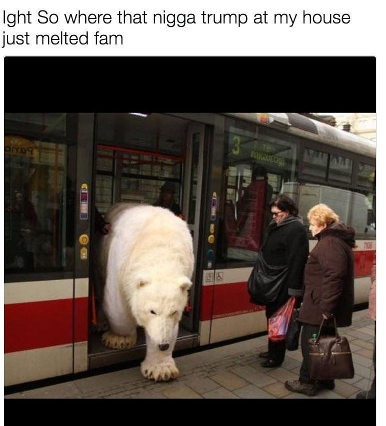 polar bear walking out of train onto the train platform
