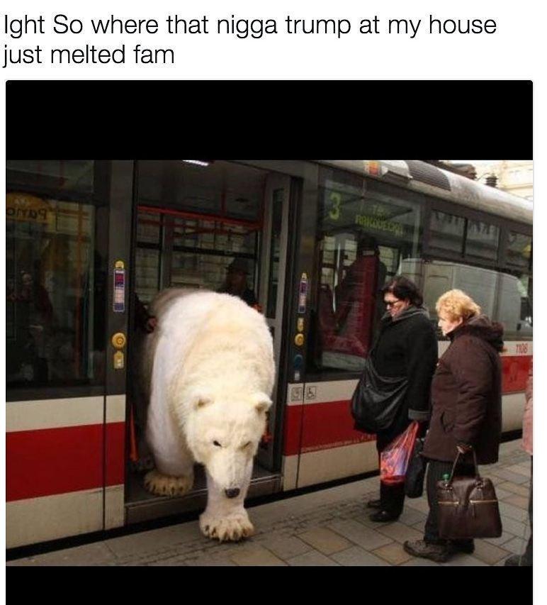 polar bear walking out of train onto the train platform