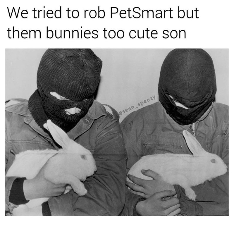 meme of two thief's wearing masks and holding bunnies