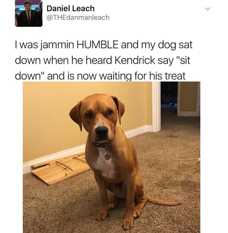 dog meme heard 'sit down' from kendrick lamar and is now waiting for his treat
