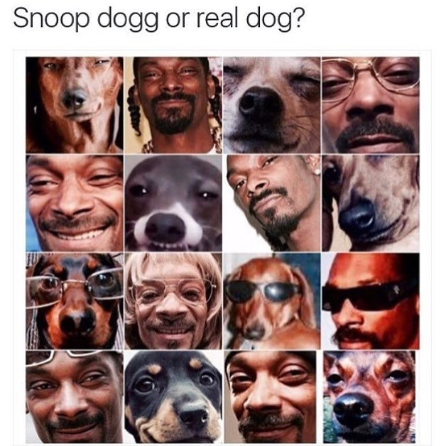 meme of a collage of photos of snoop dog and a real dog