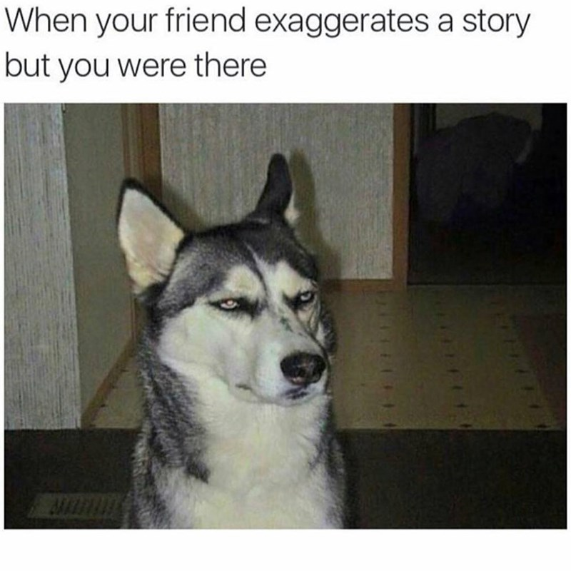 Funny meme with a dog looking unimpressed - about when your friend is telling a story and exagerrates but you were there.