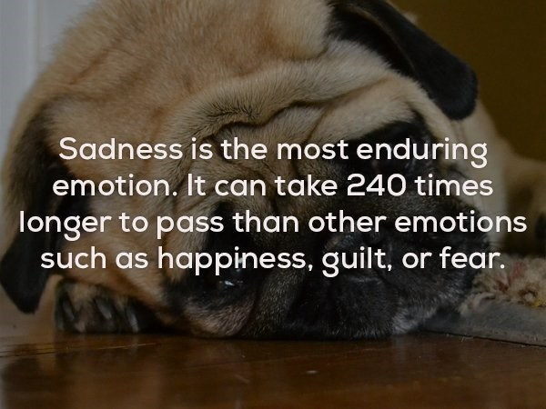 Snout - Sadness is the most enduring emotion. It can take 240 times longer to pass than other emotions such as happiness, guilt, or fear.
