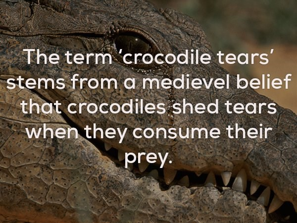 Adaptation - The term 'crocodile tears stems from a medievel belief that crocodiles shed tears when they consume their prey.