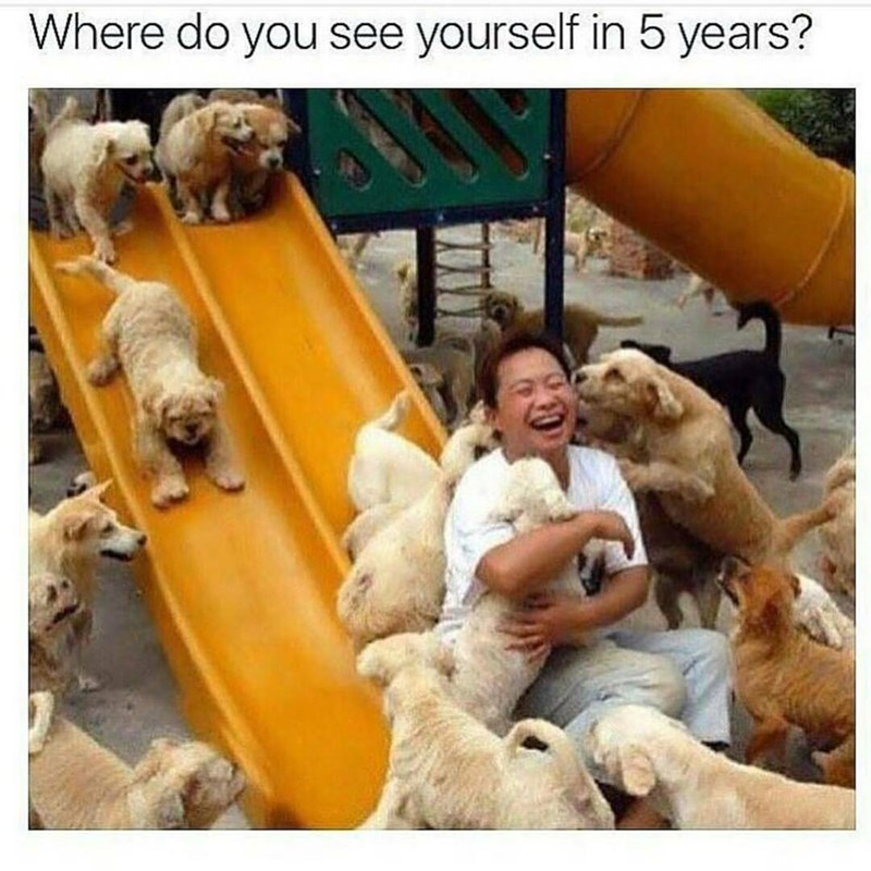 Funny meme about where you see yourself in the future, surrounded by dogs.
