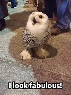 Owl - Olookfabulous!