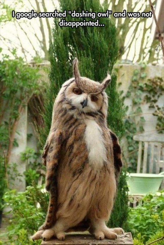 """Owl - 0google searched """"dashing owl and was not disappointed..."""