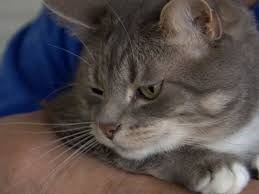 Binky the cat looking very skeptical - close up