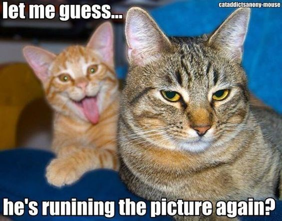 Cat - let me guess... cataddictsanony-mouse he's runining the picture again?