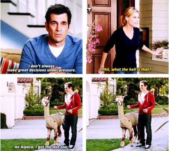 Meme about Phil Dunphy and how he is not good with making decisions under pressure and an Alpaca that he purchased because it was the last one.