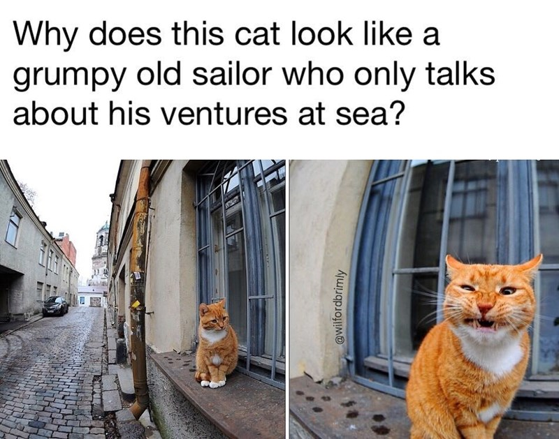 Funny meme about a cat that looks like a sailor who only talks about his ventures at sea.