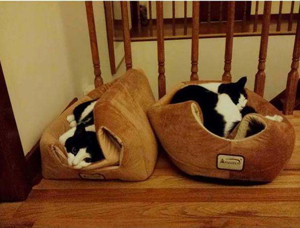 Cat - Aa