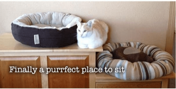 Product - Finally a purrfect place to sit