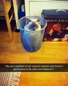 """Drink - MOCCAMA My cat is termified of our vacuum cleaner and found a good place to be safe and observe it"""""""