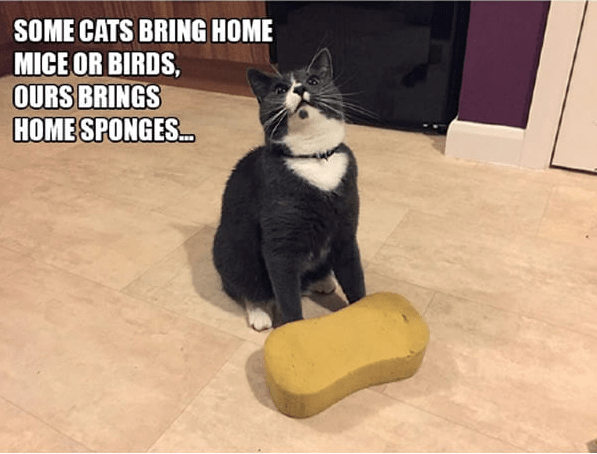 Cat - SOME CATS BRING HOME MICE OR BIRDS, OURS BRINGS HOMESPONGES