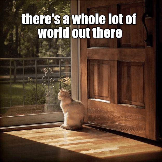 Cat - there's a whole lot of world out there