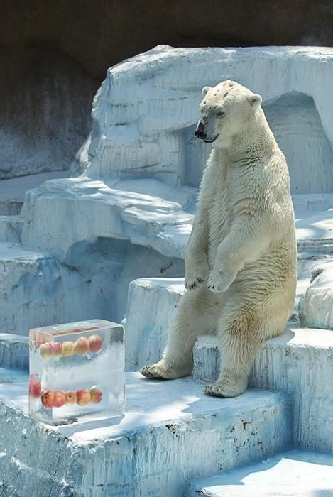 photo of a bear sitting and waiting for his dinner