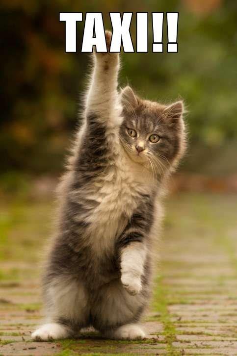 Cat - ТАXI!!