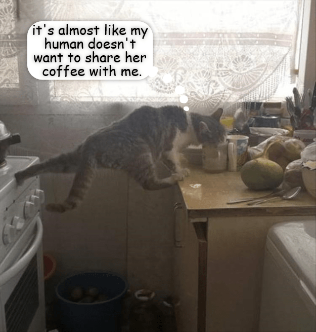 Cat - it's almost like my human doesn't want to share her coffee with me.