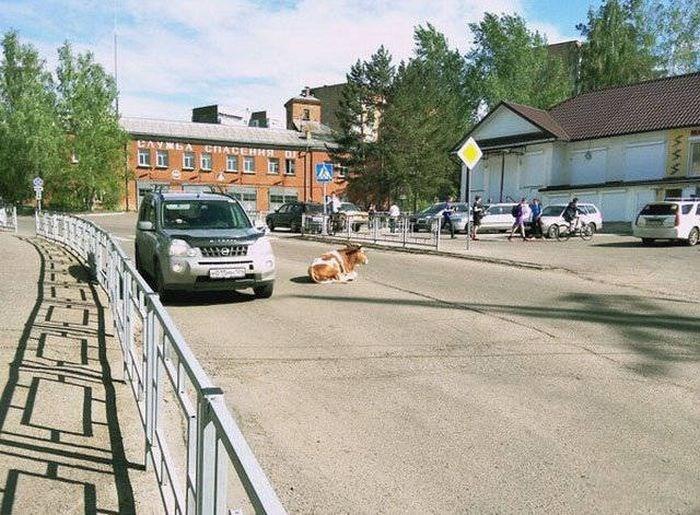 russia - Vehicle - www