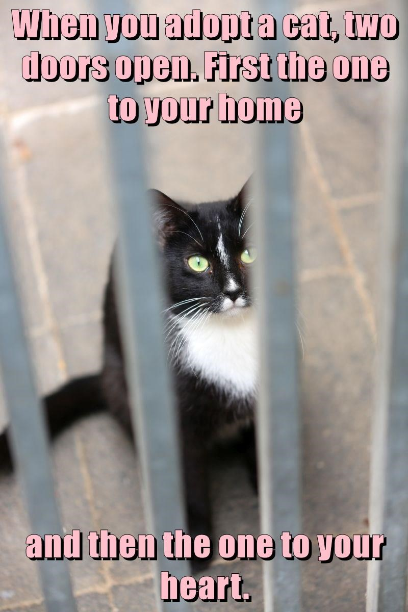 Cat - When you adopta cat, two doors open. First the one to your home and then the one to your heart.