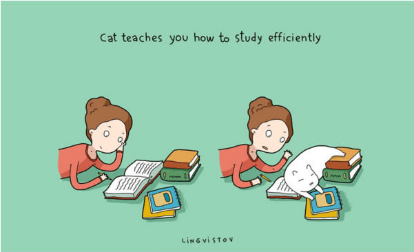 Cartoon - Cat teaches you how to study efficiently LING viSTOv