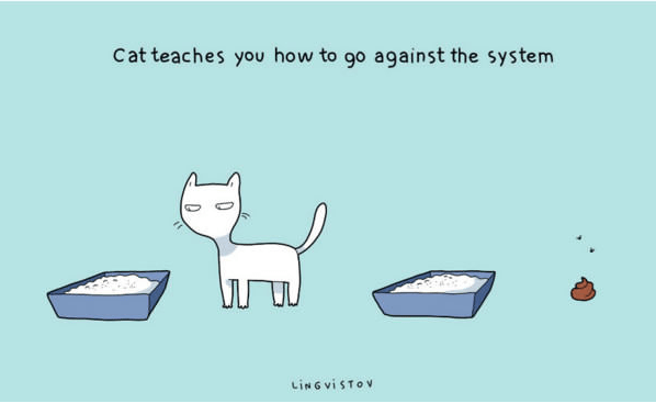 Text - Cat teaches you how to go against the system .. LisG viSTOv