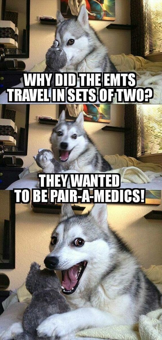 Mammal - WHYDID THE EMTS TRAVELIN SETS OFTWOP THEY WANTED TOBE PAIR-A MEDICS!
