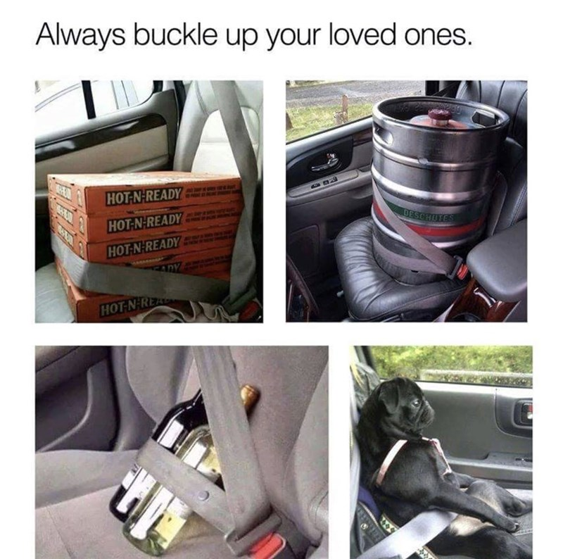 a funny meme about buckling in what is most important and the last is of a dog buckled up like a human in a car