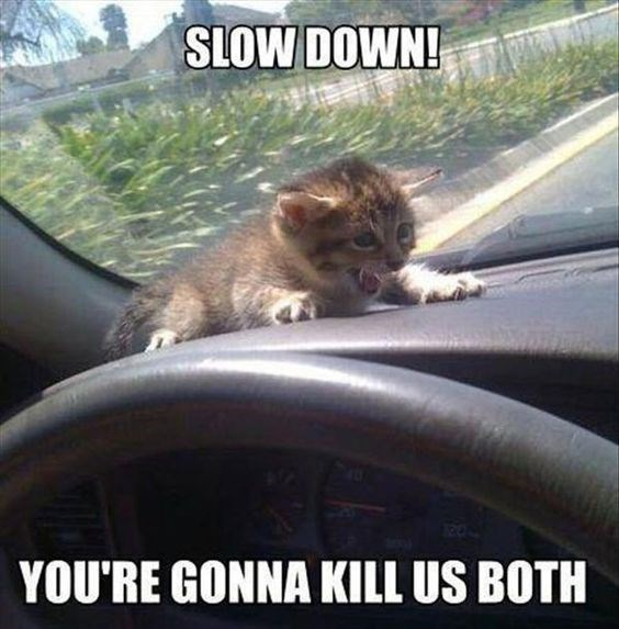 Cat - SLOW DOWN! YOU'RE GONNA KILL US BOTH