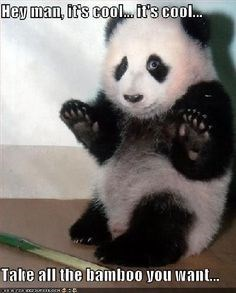 Panda - Hey man, irs cool.it's cool... Take all the bamboo you want...