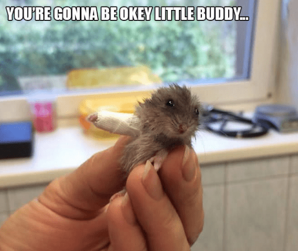 Mouse - YOURE GONNA BEOKEY LITTLE BUDDY...