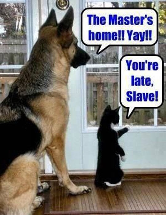 a picture of a dog and cat waiting for their owner to arrive home