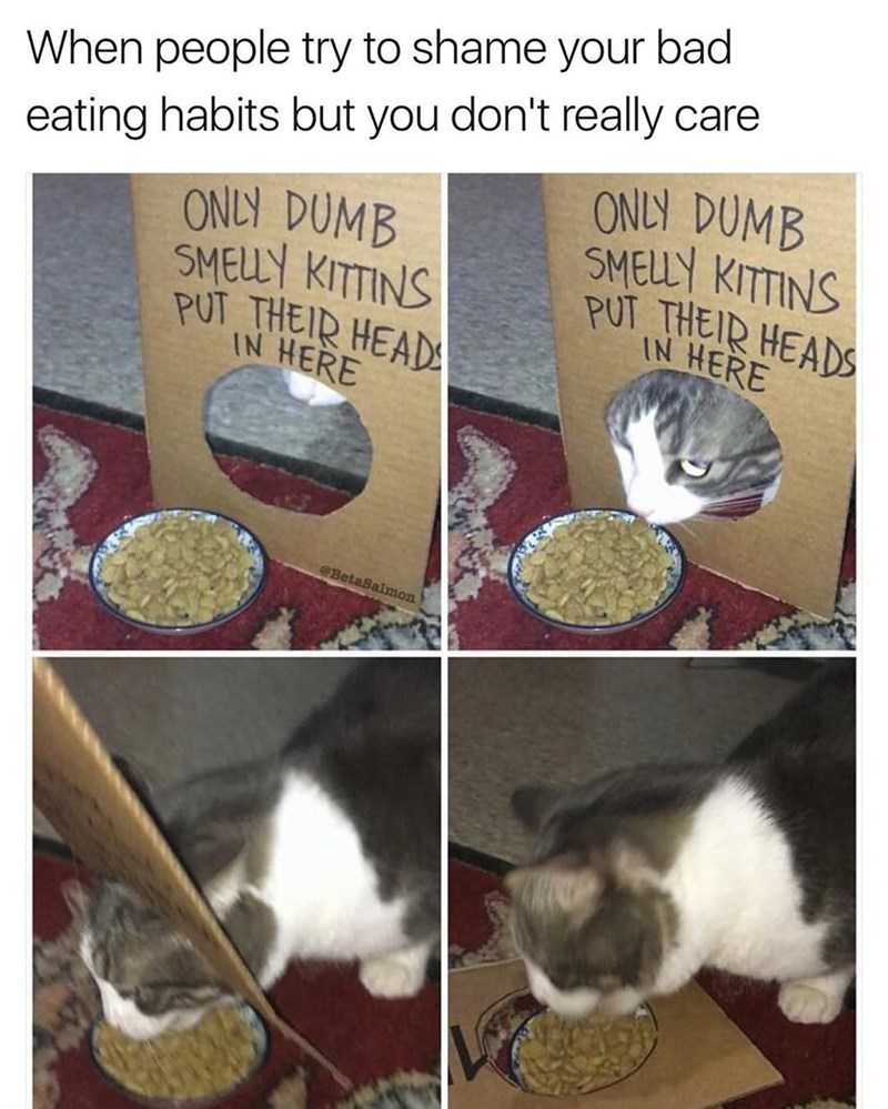 Cat is attempted to be shamed for his bad eating habits and couldn't care less.
