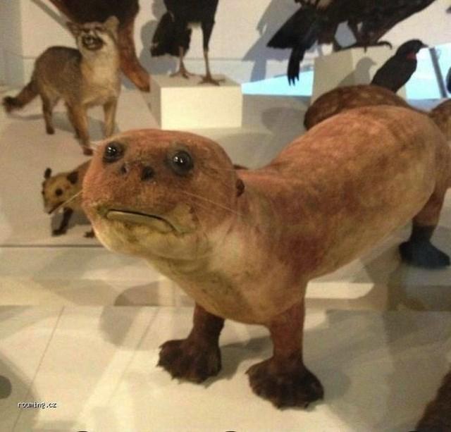 Otter - romit.cz