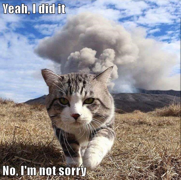 Cat walking away from an explosion with a caption saying that he is not sorry.