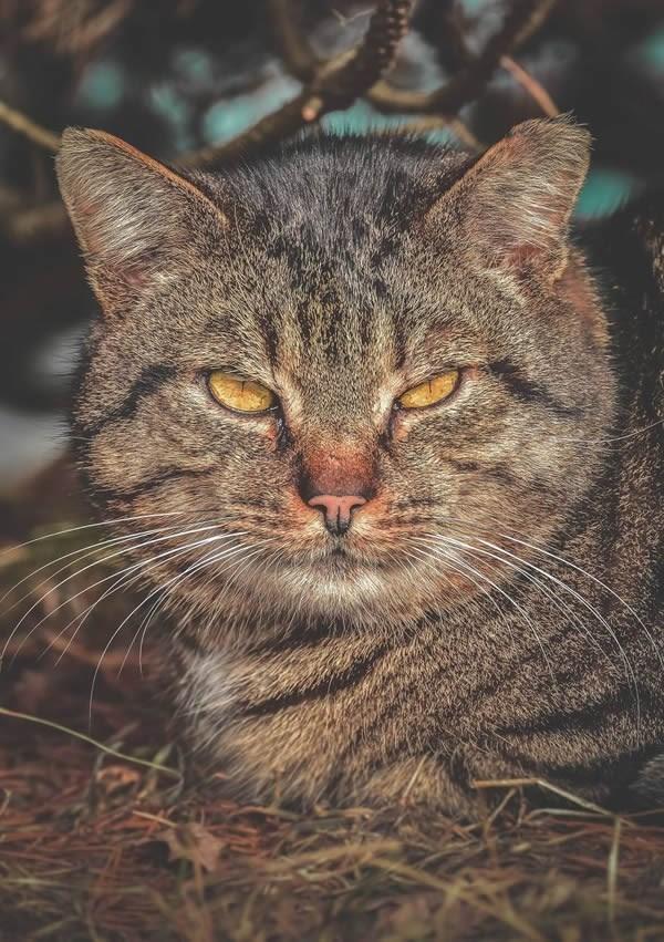 stray cats - Cat