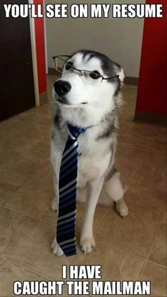 a dog dressed in a tie and glasses and interviewing for a position