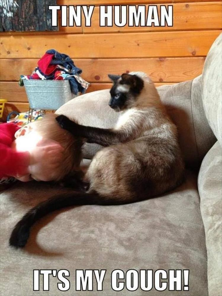A meme of a baby trying to get on the couch and the cat forbids it