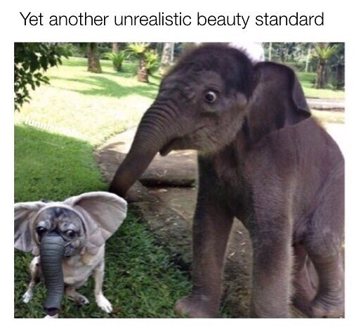 "Funny meme saying ""yet another unrealistic beauty standard"" image is of an elephant next to a dog in an elephant costume."