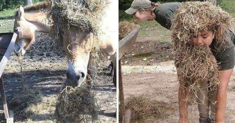 funny memes of zookeepers imitating animals and having other sorts of fun